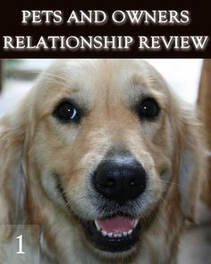 How do Dogs see Human Beings in the Interdimensions as well as in the Physical Reality? This is a Continuation to: * [Pets and Owners Relatio. Best Pictures Ever, Cool Pictures, Life Review, What Dogs, Dog Training Tips, New Puppy, Animal Kingdom, Puppies, History