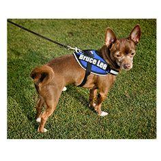 Teacup Dog Agility Harness - Mighty Mite Dog Gear