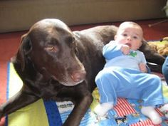 With a Chocolate lab, named Baci, of my own ---how could I NOT love this!?!?  :)