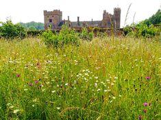 #oxburghhall #norfolk #holibobs #wildflowergarden #nationaltrust
