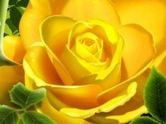 3D Rose amarillo fondo de pantalla 3D Modelos 3D
