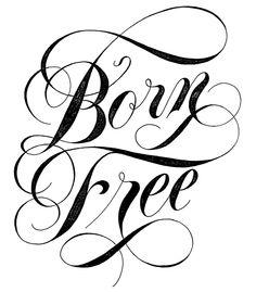 Born Free by Drew Melton #lettering #script #typography