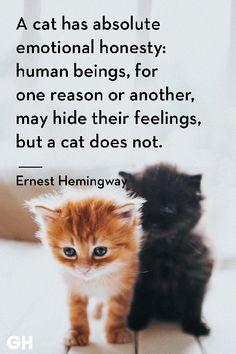 Ernest Hemingway - Cat Quotes