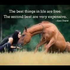 horse horses chestnut chestnuthorse beautiful nice poem quote