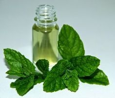 Madhavi Impex - mentha miperita oil, natural mentha piperita oil, peppermint oil - manufacturer & supplier in India Aloe Vera, Home Remedies, Natural Remedies, Health Tips, Health And Wellness, Medicinal Plants, Natural Cosmetics, Natural Medicine, Natural Health