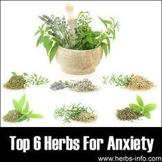 Herbs For Anxiety: Valerian (Valeriana officinalis), Kava (Piper methysticum), St. John's wort (Hypericum perforatum), Passion Flower (Passiflora incarnata), Chamomile (Matricaria recutita and Chamaemelum  nobile), Hops (Humulus lupulus)