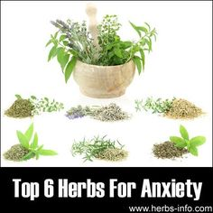 Top 6 Herbs For Anxiety - full article including much useful information for anxiety sufferers!