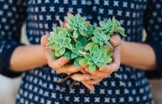 What Are Succulents? The Easiest Way to Cultivate Your Green Thumb Echeveria, Sempervivum, Propagating Succulents, Succulents Garden, Multiplier Des Plantes Grasses, Removing Negative Energy, Perfect Plants, Good Housekeeping, Plant Care