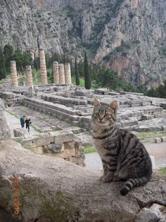 Cats just being cats all around the world. The Temple of Apollo in Greece.