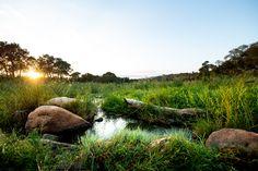 Photograph by Ross Couper Virtual Games, Golf Courses, Wildlife, Photograph, Landscape, Photography, Fotografie, Fotografia