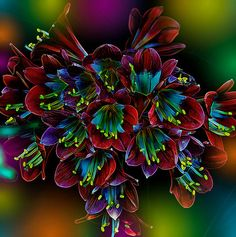 Assortment of Splendor A trumpet of flowers filled with splendor and deep and muted vibrant tones. Unusual Flowers, Amazing Flowers, Beautiful Flowers, Flowers Uk, Colorful Plants, Exotic Plants, Beautiful Paintings Of Flowers, Virtual Flowers, Stargazing