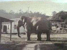 Kisah Aduka si gajah perkasa penjaga laluan Jalan Raya Timur Barat   PEKANGerik yang terletak di Daerah Hulu Perak sememangnya terkenal dengan pelbagai coretan menarik terutamanya mengenai kisah maskotnya iaitu gajah.  Suatu ketika dahulu ada seekor gajah besar yang menjadi kesayangan masyarakat di Gerik kongsi Muhd Mustaqim Mohamed mengenai maskot kebanggaan Gerik berkenaan.  Katanya gajah besar berkenaan dikenali sebagai Aduka dan sering dapat ditemui di laluan ke Lembah Belum di Gerik…