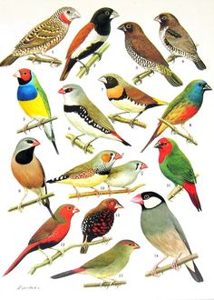 Verschillende volière vogels.