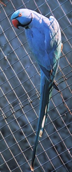 Blue suits this bird !
