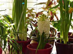 Indoor Winter Blooming Garden