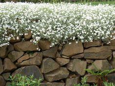 Idee per decorare il giardino a basso costo | Leonardo.tv