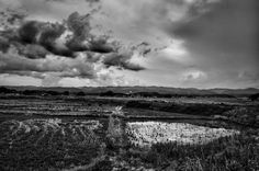 Pierpaolo Mittica (2011) Campi di riso contaminati e abbandonati, Zona di Esclusione, Minamisoma dalla serie Fukushima 'No-Go Zone' Stampa digitale su carta Hahnemühle Cm 27 x 40
