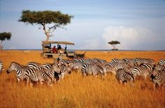 Best of African Safari to Kenya and Tanzania tourist attractions. Book now to enjoy wildlife adventure tours, beach and safari holidays, excursions. Kenya Travel, Africa Travel, Safari Holidays, Tanzania Safari, Wildlife Safari, Countries To Visit, African Safari, African Elephant, African Animals