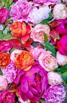 Flower Market, Amazing Flowers, Vegetables, Plants, Roses, Architecture, Arquitetura, Pink, Rose