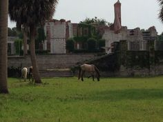 Cumberland Island in Saint Marys, GA Site of the ruins of Dungeness Mansion.