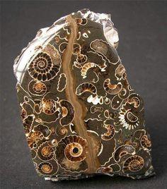 Fósil de amonites. Www.geologyin.com