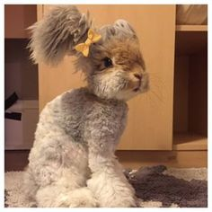 Behold Wally, the Cutest Bunny of All Time Wally is an English Angora bunny. I need me a Wally bunny! Funny Bunnies, Baby Bunnies, Cute Bunny, Bunny Rabbits, Adorable Bunnies, Angora Bunny, Angora Rabbit, Cute Baby Animals, Animals And Pets