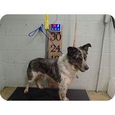 Bandit   LAFAYETTE ANIMAL AID-RI   Glastonbury, Connecticut   Pets.Overstock.com