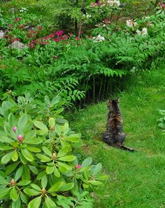 Three Dogs in a Garden: Shade plants