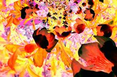 Christrose auf Leinwand 75 x 50