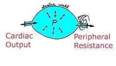 Mean Arterial Pressure and Pulse Pressure