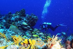Google Image Result for http://aquaviews.net/wp-content/uploads/2010/10/Scuba-Diving-7.jpg