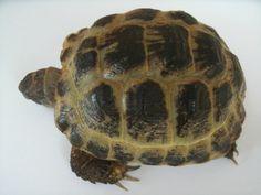 Comment prendre soin de nos tortues à La Réunion