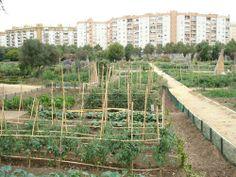 Huertos urbanos Vineyard, Photoshop, Outdoor, Seville Spain, Orchards, Parks, Urban, Outdoors, Vine Yard