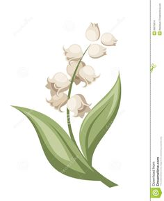 Lily of the valley flower | Vector illustration