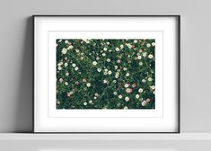 Limited edition signed photographic print by Anna Partington - 'A bed of summer' - 12 x 16 inch - Devon Mount Board, Pink Rose Flower, Black Leaves, Devon, Daisy, Anna, Bed, Artist, Summer