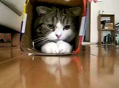 Maru - the cat.  If you've never watched Maru... then you're missing out!