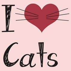 I Love Cats! - For more loveable pictures of cats and kittens, visit our website here. I Love Cats, Cute Cats, Funny Cats, Adorable Kittens, Crazy Cat Lady, Crazy Cats, Gatos Cats, Here Kitty Kitty, Kitty Cats
