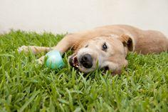 Photo Lab Pet Photography - portfolio - canine - dog-days - 54