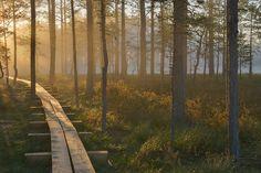 Lahemaa National Park #Estonia
