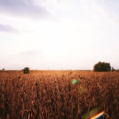 Fields forever. Shot with a Sony NEX 5