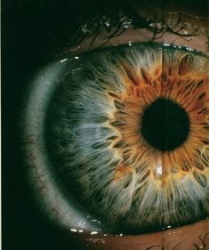 The human eye  is a truly amazing structure. Look at the beauty and detail in the iris alone!