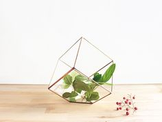 Glass Geometric Terrarium Container | Cube Planter - Waen - Osłonki na doniczki