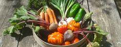 Vorsätze wie Abnehmen und gesunde Ernährung brauchen präzise, alltagstaugliche Ziele!  www.web-ernaehrung.de