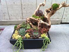 Simply Succulent Plant Designs- Los Angeles, Orange County