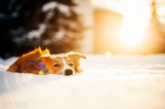 20 year old Ksenia Raykova from Russia takes vivid and playful dog photos that her fans (myself included) are absolutely in love with.  Ksenia agreed to talk to Bored Panda about her passion for dog photography and share some tips with us.