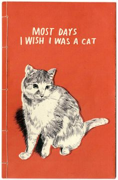 Oft wär ich gerne eine Katze