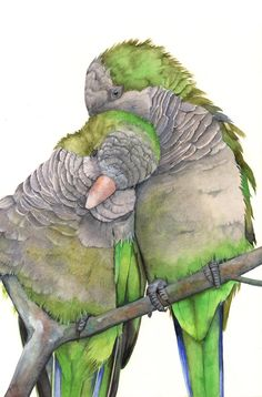 quaker parrots by Louise De Masi