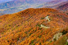 The Skyline Drive is a 105-mile National Scenic Byway that twists and winds through the over 200,000 pristine acres that makes up Shenandoah National Park.