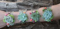 Succulent Cuff Corsage Bracelet - Live ***Disclaimer: All succulent wedding arrangements including bouquets, bouts, corsages, hair combs, crowns etc. are outsourced to our awesome floral partner Amb Prom Flowers, Diy Wedding Flowers, Bridal Flowers, Wedding Bouquets, Floral Wedding, Prom Corsage And Boutonniere, Bridesmaid Corsage, Boutonnieres, Wrist Corsage Wedding