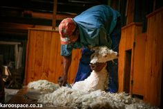 Somerset East, a short inland drive from Port Elizabeth, has heritage and history in full supply. Angora Goat, Port Elizabeth, Shearing, Somerset, Avon, Explore, Website, History, Historia